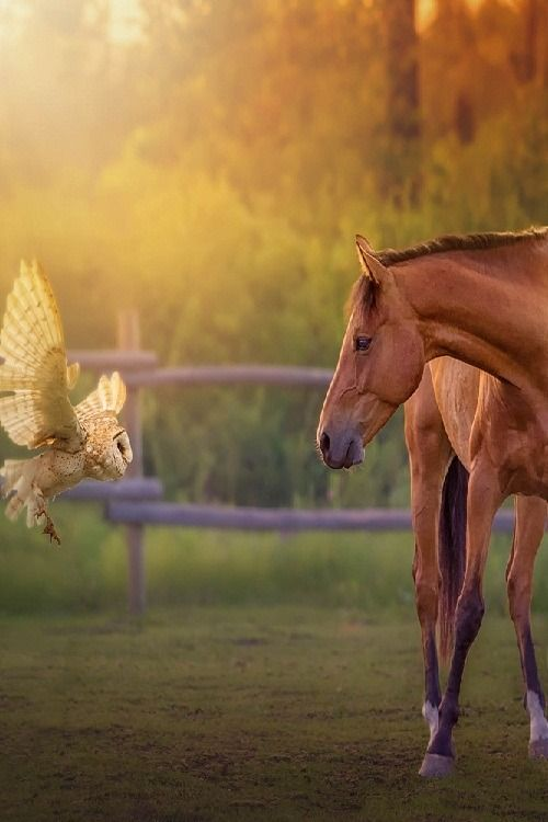 Encounter. Owl and horse. Fancy photo art!