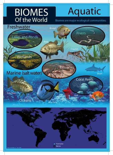 science biomes Abundance: a measure of the degree to which an ecosystem possesses large  numbers of particular species an abundant ecosystem may or may not have a.