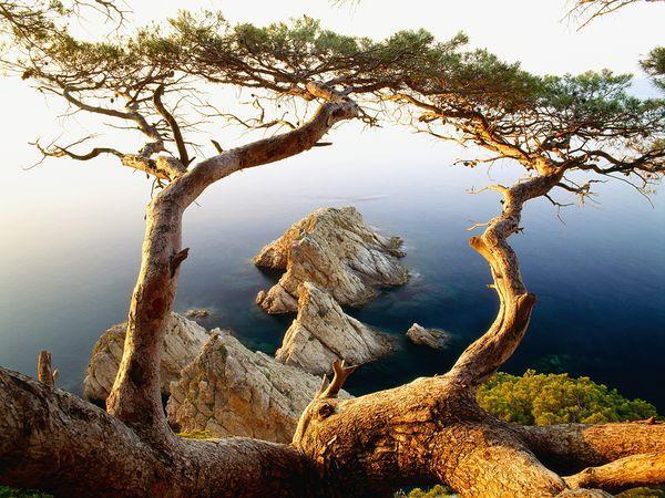 Costa Brava, Spain: Nature, Tree, Costabrava, Places, Photo, Spain, Costa Brava