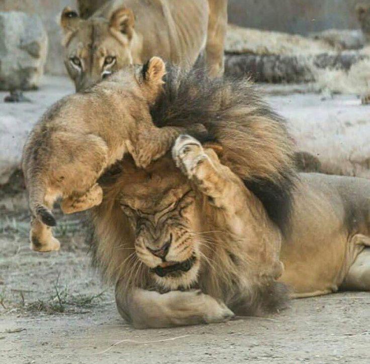 Hazzzaaaa!!!!!.......Ok, ok now let's take it easy dear......Sorry  dad....It's ok honey