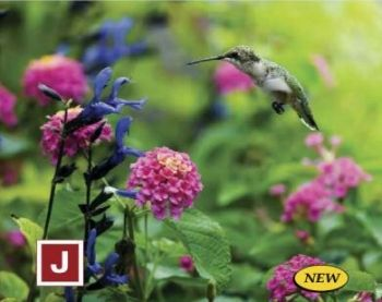 Humming Bird Garden Mix. Everyone loves the amazing antics of the #humming #bird and our new #seed #collection is just the answer to attracting them to your #garden or #window box. This special 10 gram seed mix will cover over 150 square feet and contains #Cosmos Sensation Mix, #Tall Mixed #Cornflower, #Indian Blanket, #Tree Mallow, #Lance Leaved Coreopsis, #Shasta Daisy #Alaska, Purple Coneflower, #Globe Gilia, Annual Mix #Phlox, #Catchfly, Tall White Sweet #Alyssum and #Foxglove…