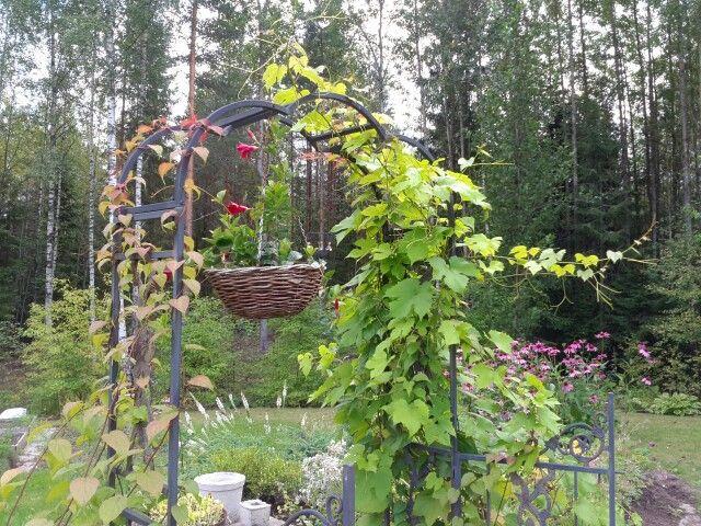 Gate from garden to garden ...
