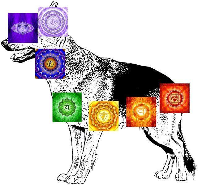 Anche i cani e gatti hanno i vortici di energia.