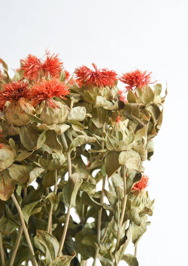 Dried Natural Dried Carthamus Bidens Dried Flowers Flowers Flower Names