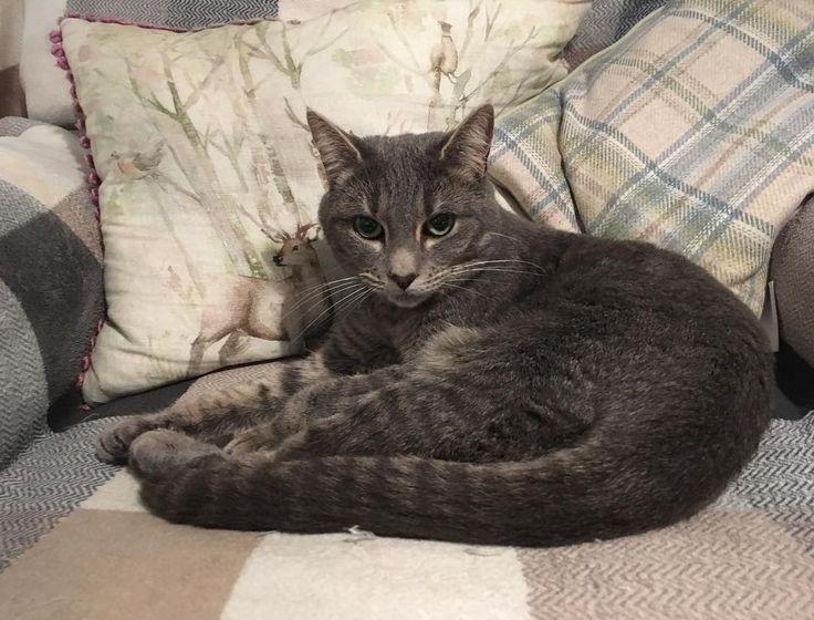 Как приятно провести #выходные на уютных подушках @voyage_deco @lisaclarkbrown #voyagemaison #pillows #cat #подушки #котики #galleria_aben