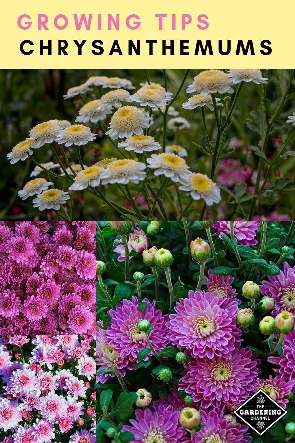 Pin On Gardening 101