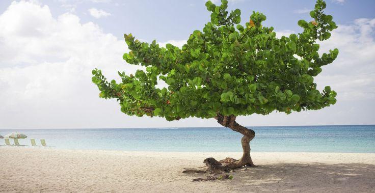 Curacao og Aruba - karibiske perler - Carpe Diem