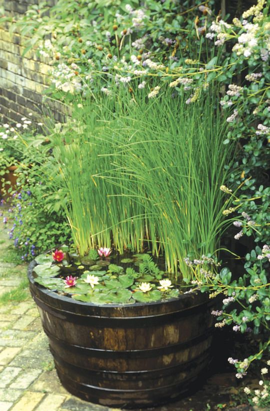 76 best container ponds ponds in a pot images on for Best aquatic plants for small ponds