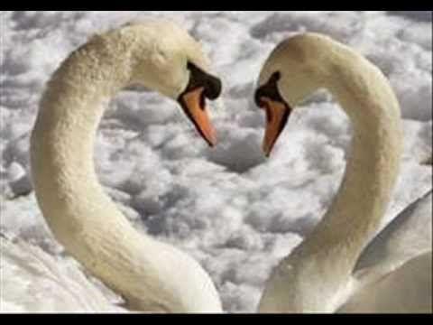 O lago dos cisnes- Tchaikowski - YouTube MUSIC