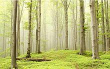 O Envio gratuito de escritório de Madeira papel De parede pintura de paisagem 3D tema floresta árvore de sala de estar quarto mural do hotel quarto de hóspedes(China (Mainland))
