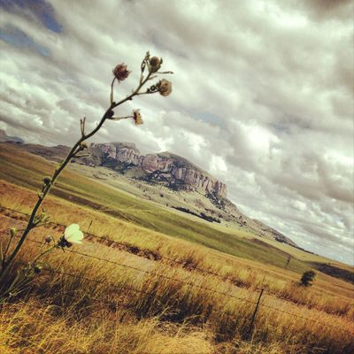 Freestate, South Africa
