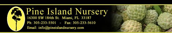 Pine Island Nursery: Products Page A - B