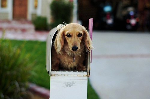Please mail me a dog :): Pet, You'V Got Mail, Gorgeous Animal, Proper Things, Mail Time, Dogs Funny, Cute Dogs, Animal Dogs, Adorable Animal