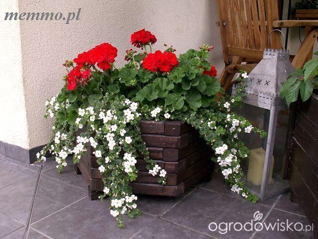 Dekoracje wejścia, tarasów, furtek... - strona 2 - Forum ogrodnicze - Ogrodowisko