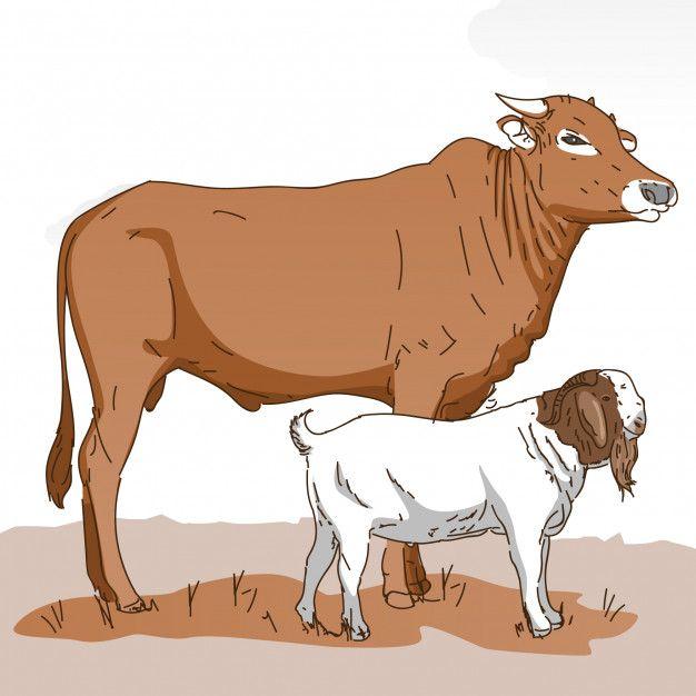 Cow Goat Hewan Logo Hewan Sketsa Hewan