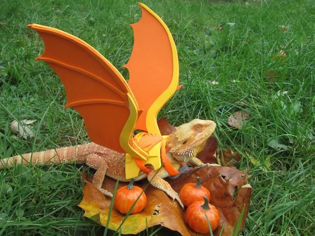 Mini Dragon...I am literally giggling, this is too funny :)