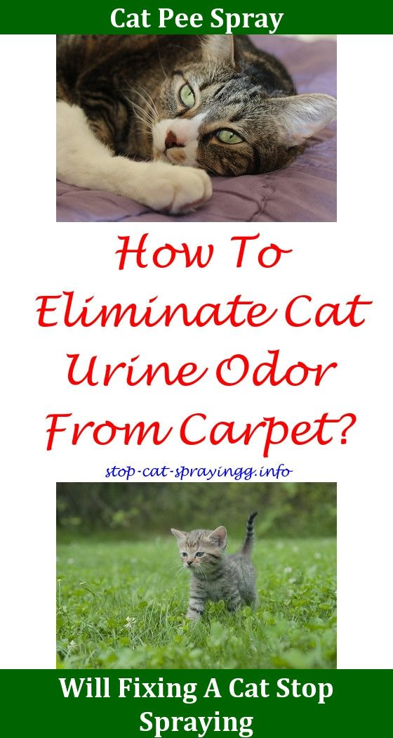 How To Get Rid Of Old Cat Urine In Carpet Www