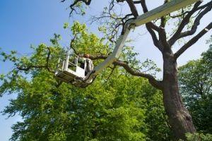 Tree Service Company Atlanta Area