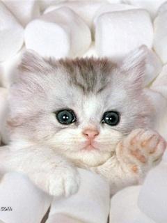 Awwww...sweet little Marshmallow!! :)