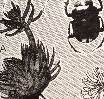 teatowel print with flowers and beetles