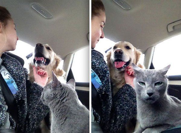 Cats and dogs are the best of enemies – 30 Pics