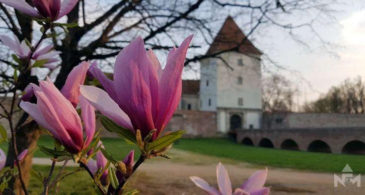 Tavasz Sárváron és a múzeumban