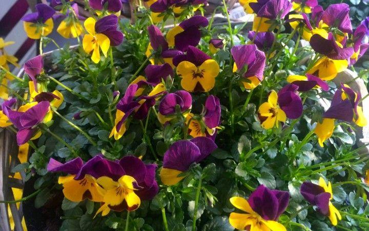 GARTENARBEIT IM MÄRZ  Bauernregel im März: Gibt's im März viel Regen, bringt die Ernte wenig Segen. http://www.kraeutergarten-magazin.de/tipps/gartenarbeit-im-maerz/