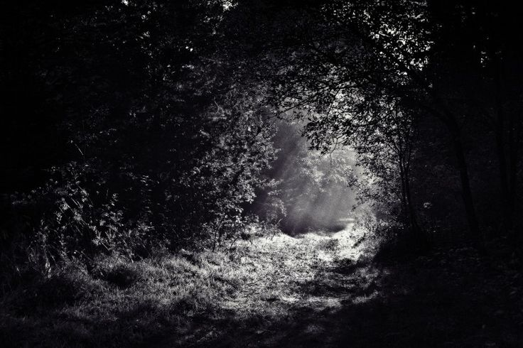 Black and white image of sunbeam in forest
