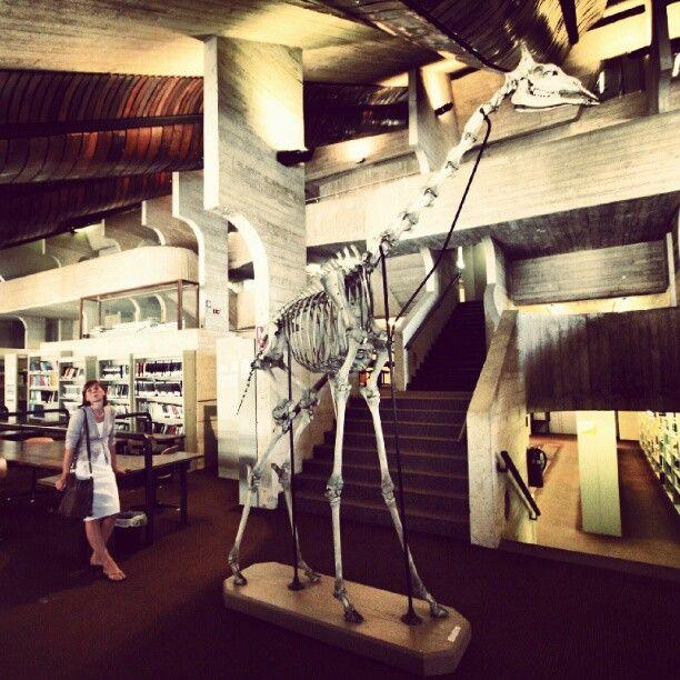 #Giraffe #skeleton, #UCL, Louvain-la-Neuve, #LLN, Journées du patrimoine 2012
