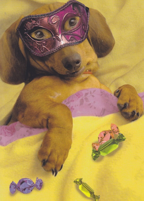 Mardi Gras Doxie @Style Space & Stuff Blog French this seems like something you would find funny.