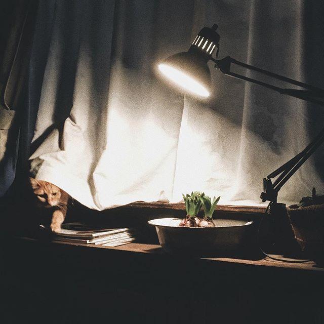 日曜日 晴れ  時間を気にせず過ごせる朝    #暮らし#小さな灯りの中 #早朝#猫#ねこ#ネコ#ねこのいる暮らし #猫との暮らし #cat #cats #catstagram #ちゃとら #茶とら #古道具