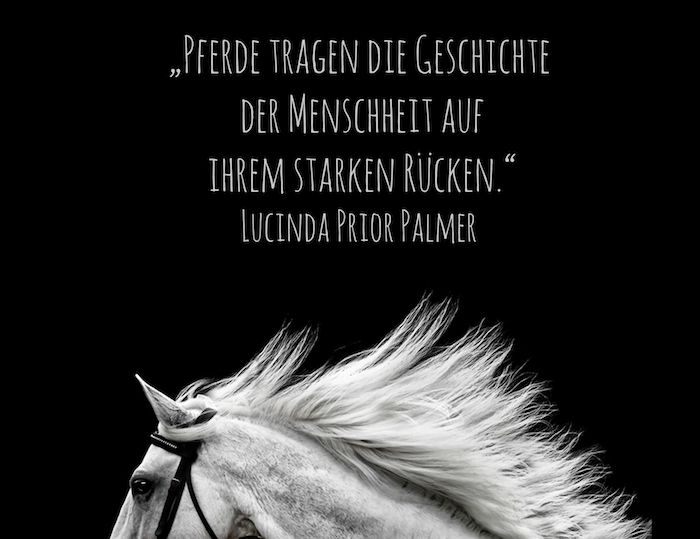 ▷ 1001 + Ideas for beautiful horse pictures and horse awards