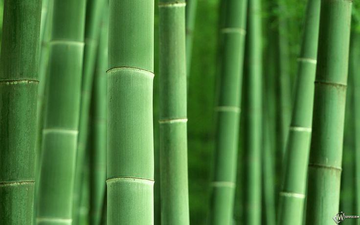 Обои, Бамбук, , 1920x1200, картинки