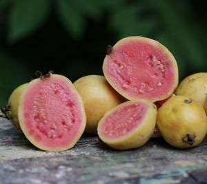 Guava health benefits & nutrition facts. https://www.budonation.com/nutrition-fact/67/guava-health-benefits-nutrition-facts