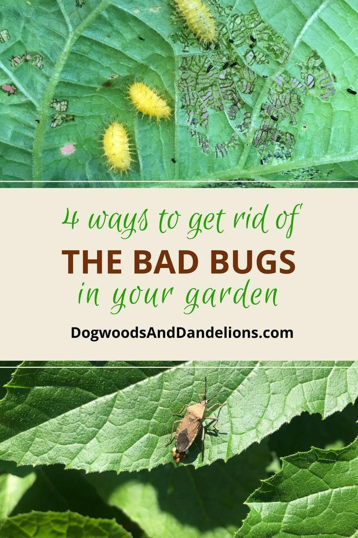 6 Things To Keep Bad Bugs Out Of Your Garden Gardenpests Garden