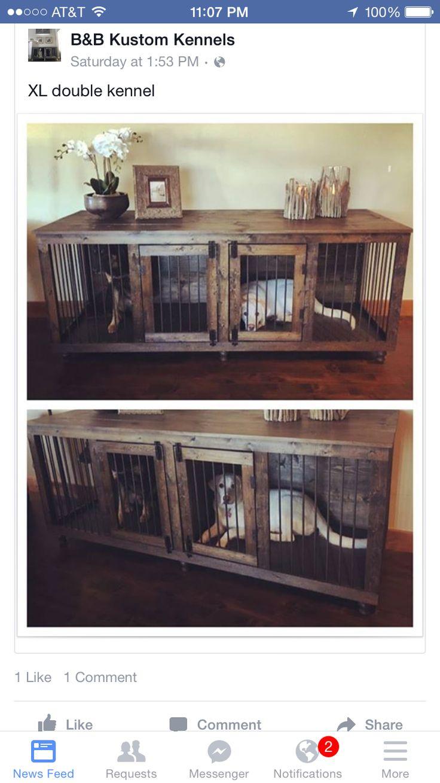 best blitz u axel images on pinterest dog cat animal pictures