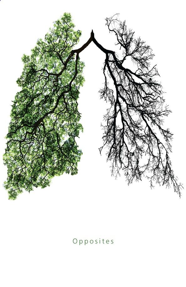 this is another anti smoking campaign trying to motivate people to stop smoking by comparing your lungs to trees by what they look like in spring and winter. it is a smart way of getting the point across as words is not needed as you can tell that the right side is what your lungs look like smoking and the left is what they look like when you dont smoke