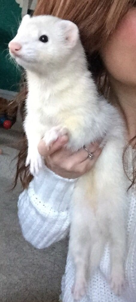 Jem, Alicardy's ferret. He found him drowning, and saved the little guy, and they've been together ever since.