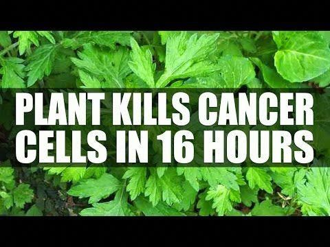 CANCER DIES WHEN YOU EAT THESE 10 FOODS, YOU SHOULD START