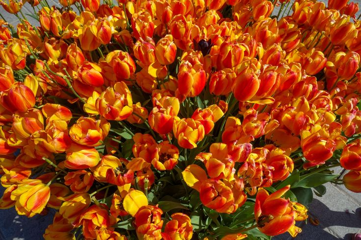 #beautiful flowers #bright colours #bunch of flowers #desktop wallpaper #flower bed #flower wallpaper #free wallpaper #fresh flowers #red #red flowers #spring flower #spring flowers #wild flowers #yellow flowe 4k