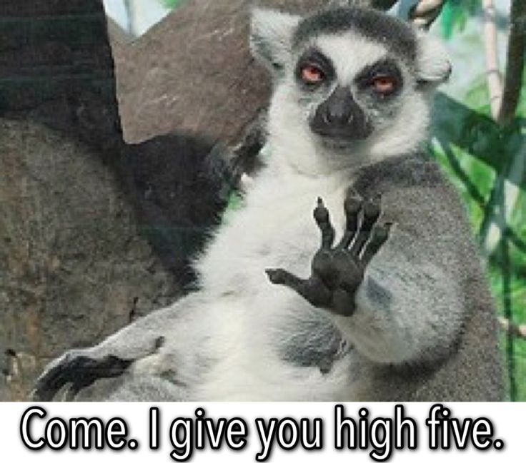 Pin By Marlana Fury On Memes High Fives Funny Animal Photos Funny Animal Pictures Funny Pictures