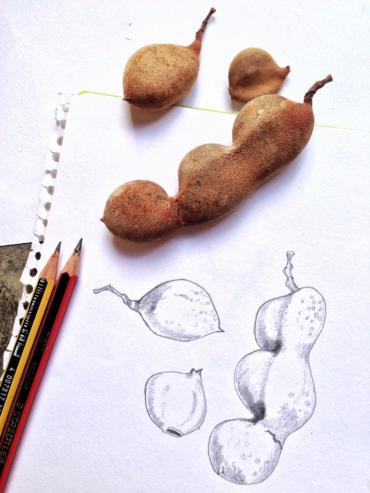 Tamarind seed pods come in lots of unusual, curvy shapes.