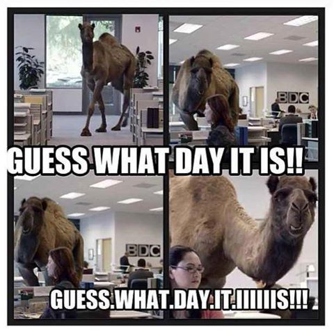 guess what day it is camel | Photo: UH OH! Guess what day it is...Oh yeaaaa it's Hump Day!And a ...