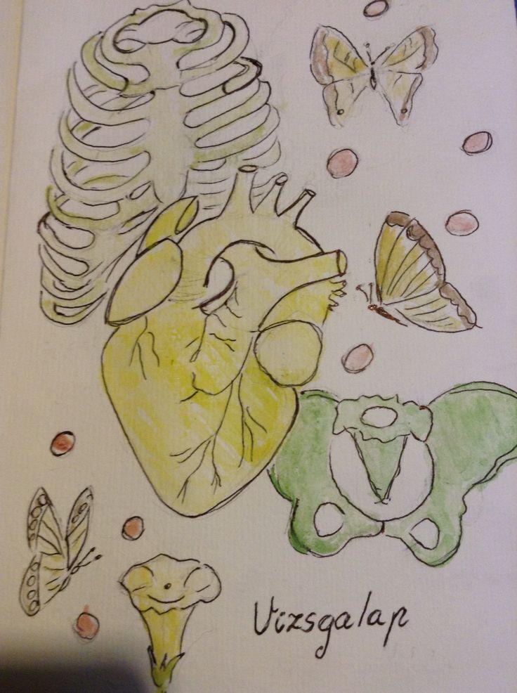Heart and bones