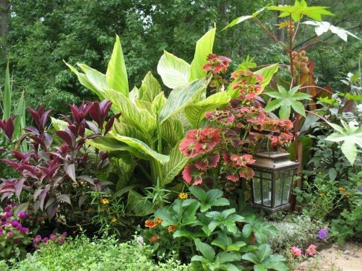 jardines tropicales jardines modernos plantas ideas de jardinería