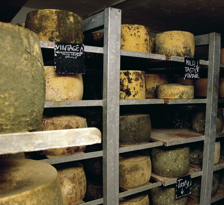 Tasmania has the perfect climate to produce perfect cheese. It's a place where you can slow down, take time to explore and enjoy beautiful scenery and amazing cheeses. If you're a foodie you need to get to Tassie. @Gourmet Traveller http://www.gourmettraveller.com.au/travel/tourismtasmania/cheese/ #discovertasmania #cheese #tasmania