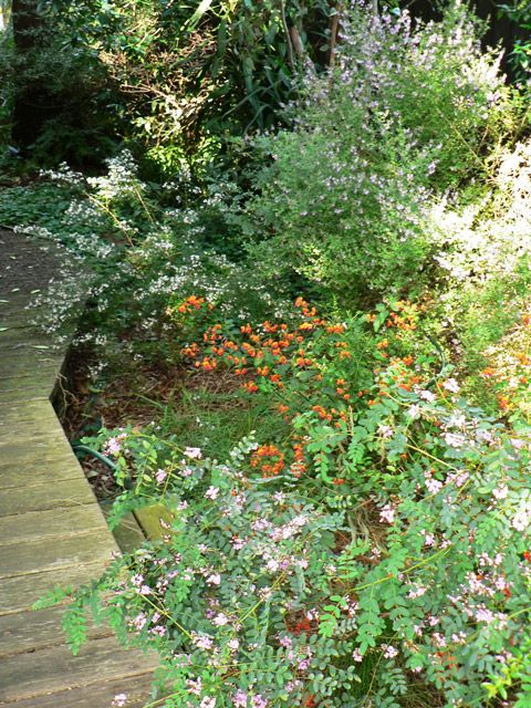 A shady section of the garden