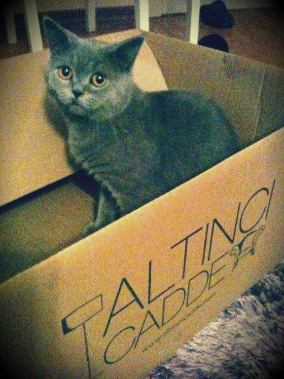 Topaç, sahibesi tarafından yeryüzünün en ürkek kedisi olarak nitelense de kutusuna alışmış görünüyor!     Siz de en yakın dostunuzun bir kutu içinde çekilmiş fotoğrafını sosyalmedya@altincicadde.com'a gönderin, 25 TL değerinde hediye çekinin sahibi olma şansını yakalayın!