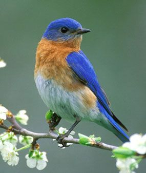 I love seeing these guys at the birdfeeder and love it even more when they take up residence in our bluebird house.