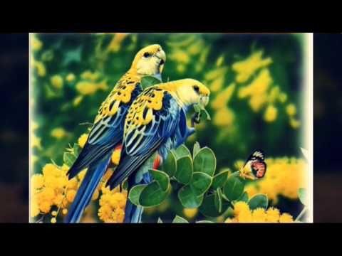 funny bird's